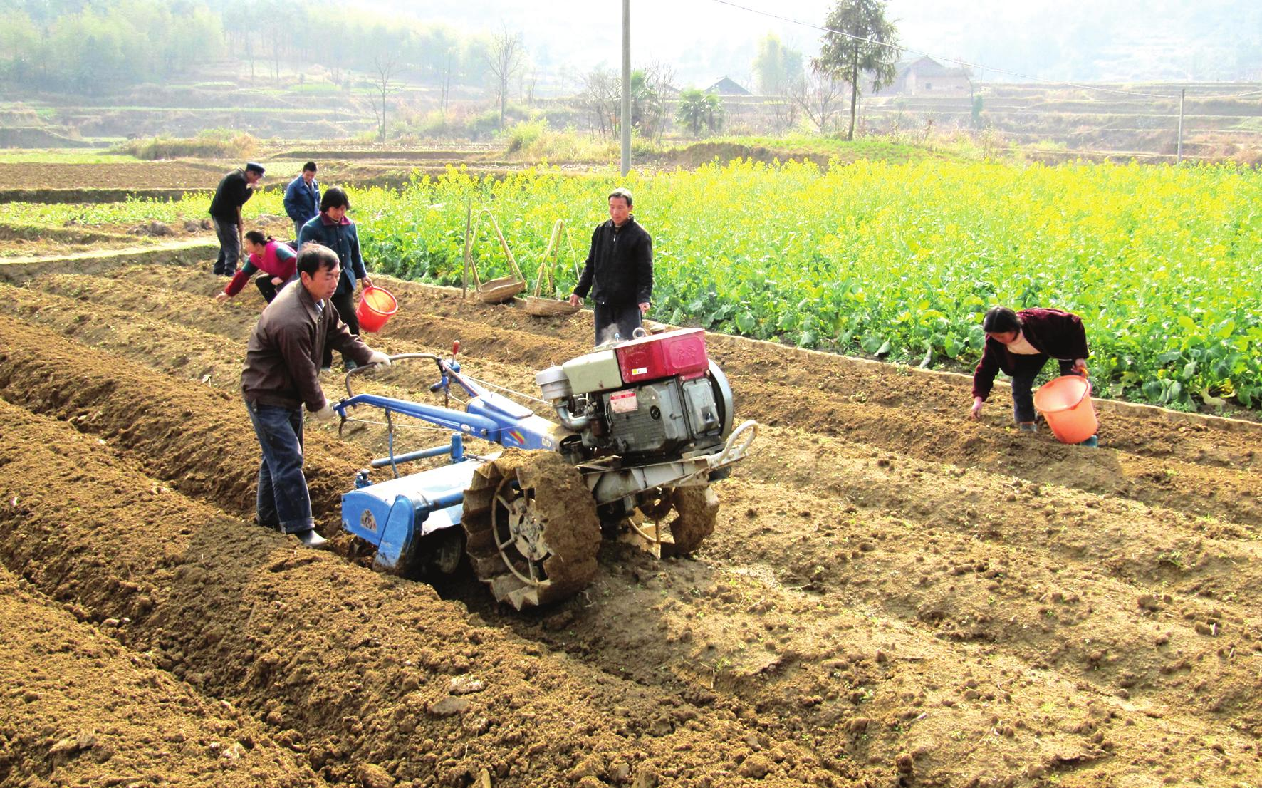新宁县安山乡洪合村烟农正在用小型起垄机为即将移栽烟苗的土地进行二图片