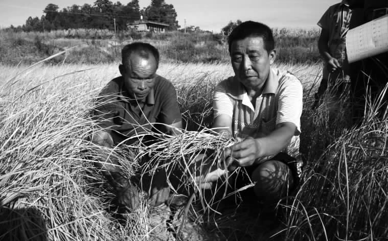 邵阳日报电子版_2013-08-01_综合新闻_邵阳县五峰铺镇 ...