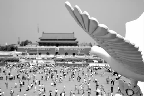 """天安门广场""""和平鸽 """"飞翔"""