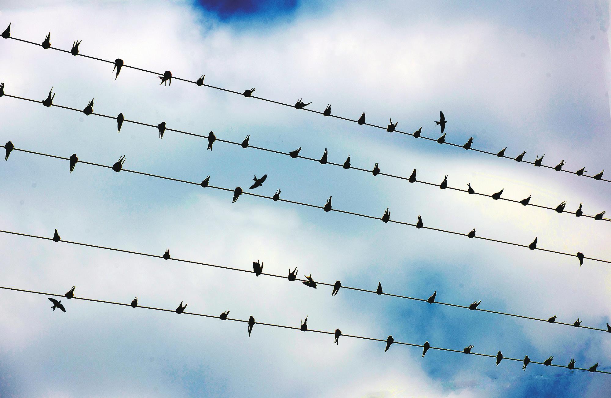 停在电线上休息的小鸟就像一个个跳动的音符.
