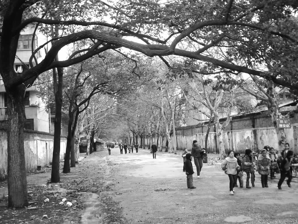 只有路两边的樟树和梧桐树在诉说着以前那段历史