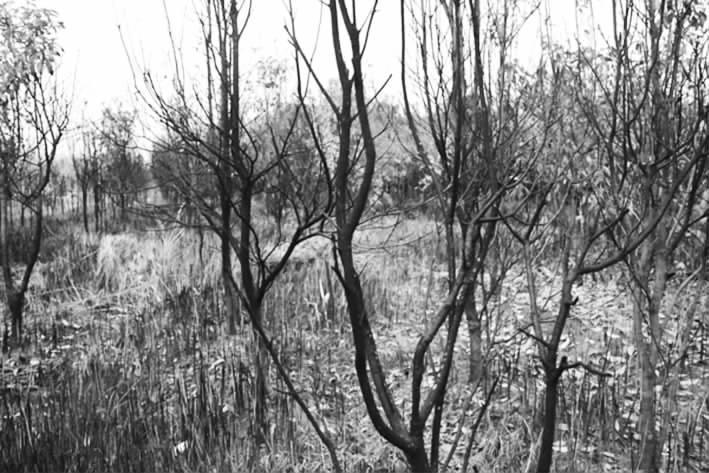 据刘建新介绍,2004年 ,自己承包了乡里的一块荒山栽培树木用来